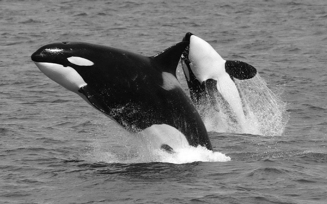 Killerwal oder Killerphrasen?