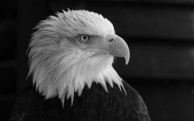 Adler oder Muschel